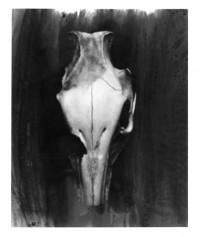 skull - 03.01.2015