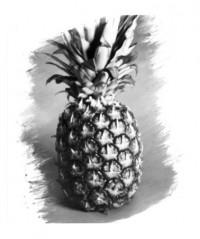 Ananas - 05.09.2014