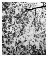 flowering trees - 10.04.2015
