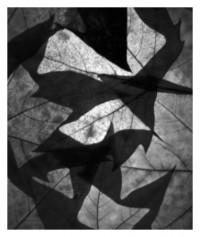 leaves - 10.10.2014