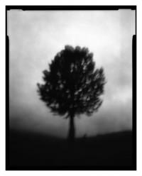 tree - handhold - 11.07.2014