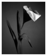 paper flower - 12.02.2015