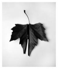 leaf - 16.03.2015