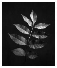 leaves - 20.09.2014