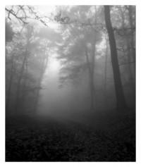 Waldweg - 20.11.2014