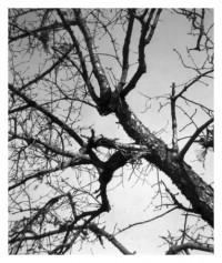 tree - 24.10.2015