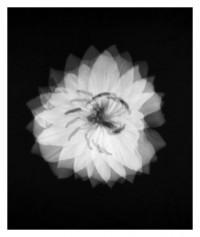 flower mosaic - 27.09.2014