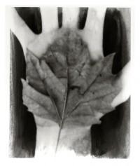 Hand / Blatt - 27.10.2014