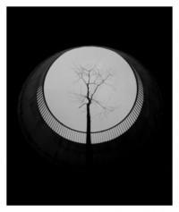 urban tree - 28.05.2014