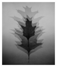 leaves - 30.08.2014